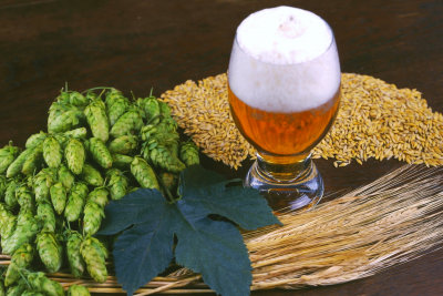 beer with green leaf